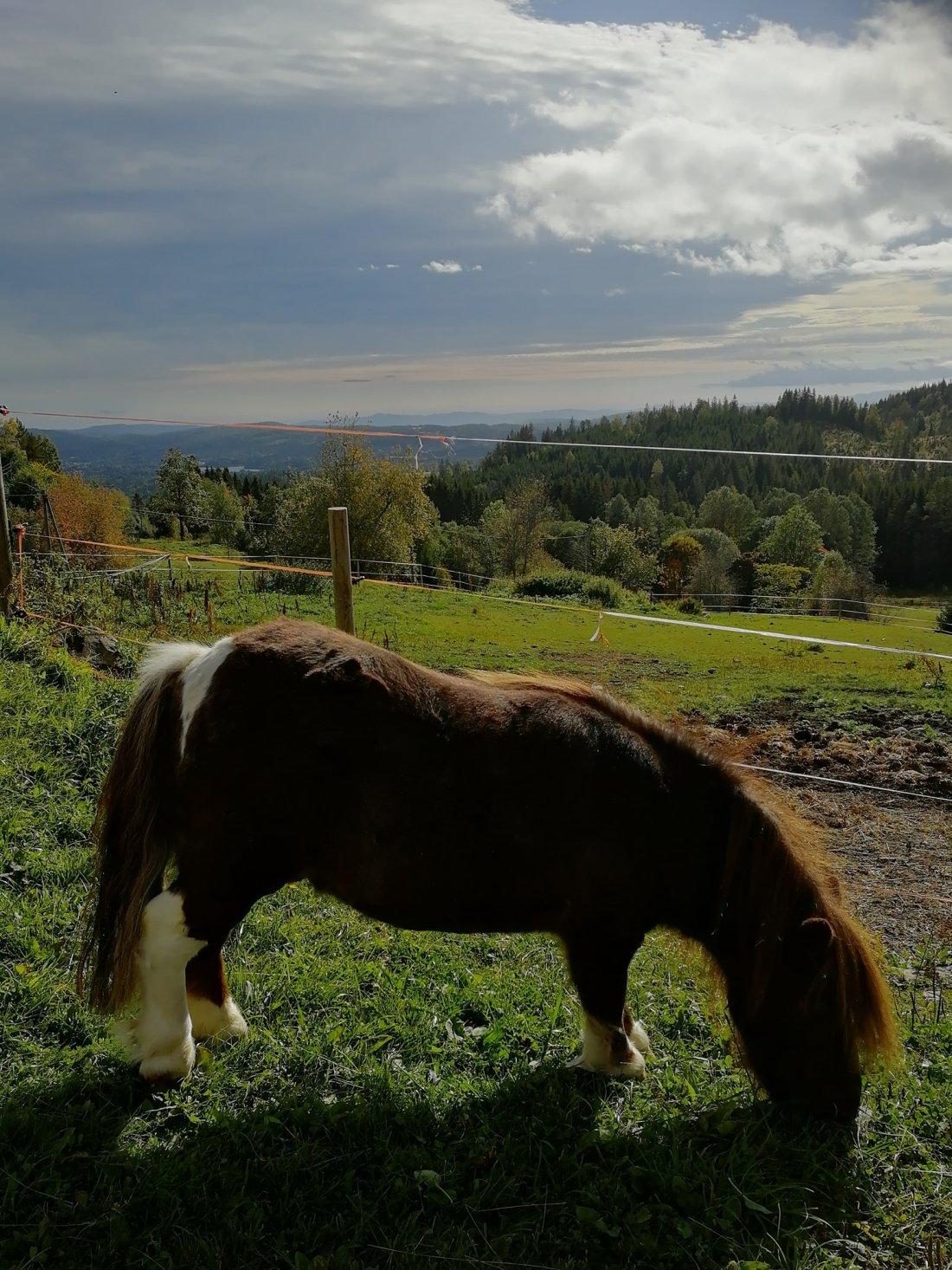 Hest i Solnedgang